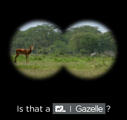 ent_gazelle_email_blast_v3a